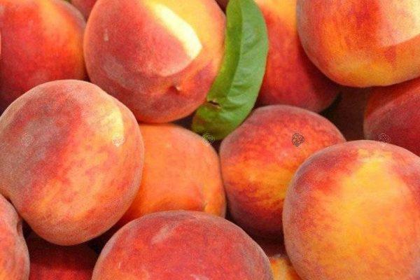 Šeimos persikas